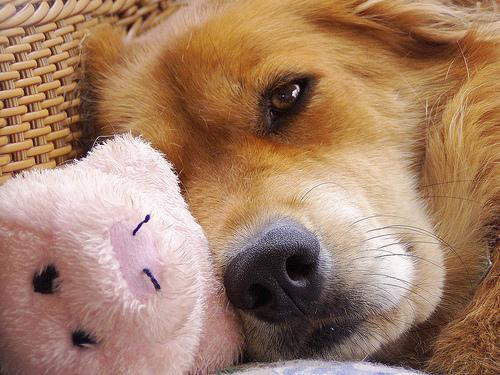 صور كلاب - صور لانواع الكلاب