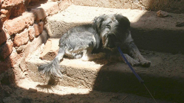 Sun loving dog