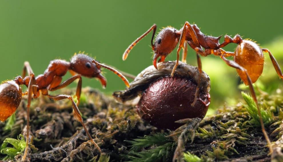 Ants' unity