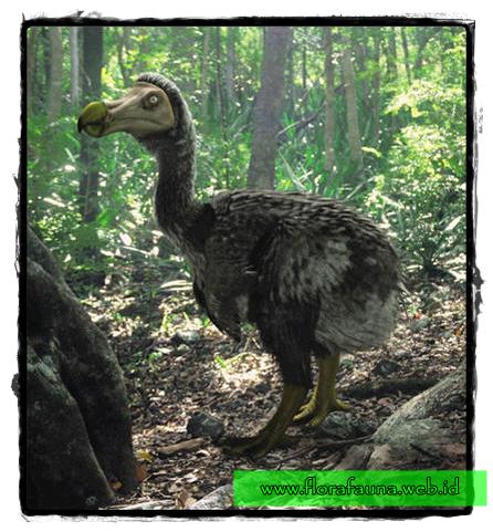 Deskripsi dan Fakta Burung Dodo | www.florafauna.web.id