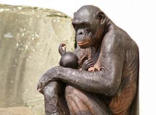 Monstruos híbridos humano-animal están siendo creados por científicos de todo el planeta