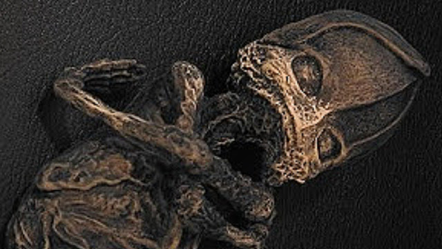 Mummified Alien Discovered in Russia
