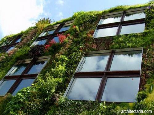 Desain Taman Dinding dan Atap Rumah YASSIR FATHURRAHMAN