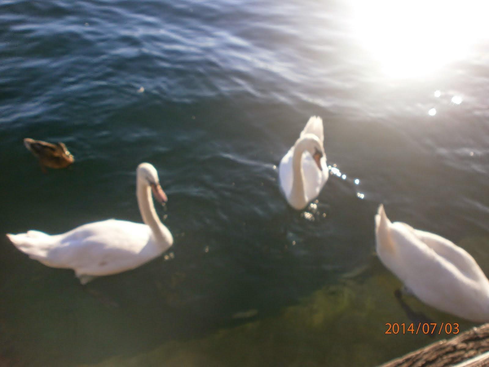 Λίμνη Ζυρίχης