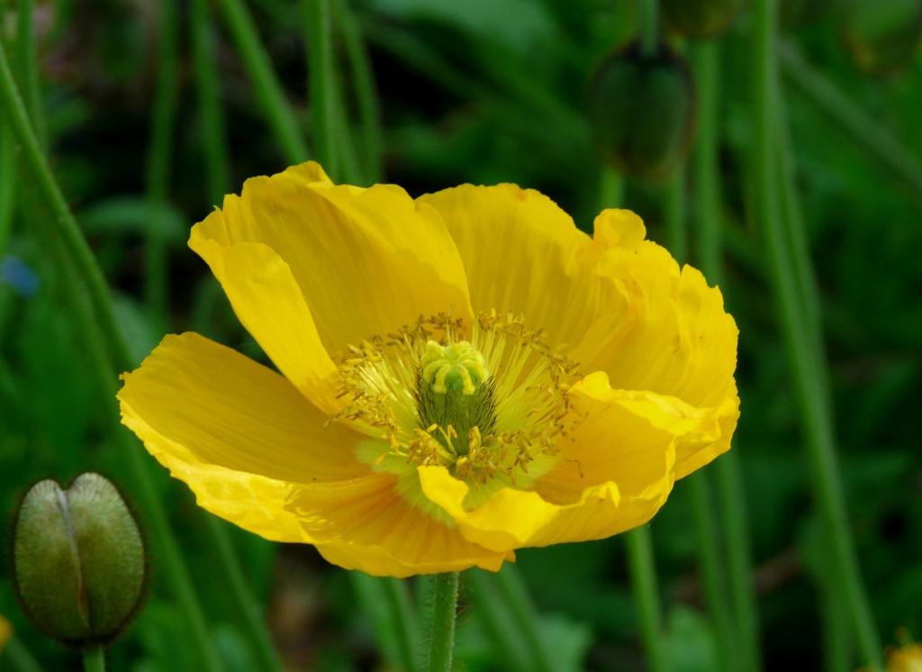 Ephémères : Fleurs de Mai (1)
