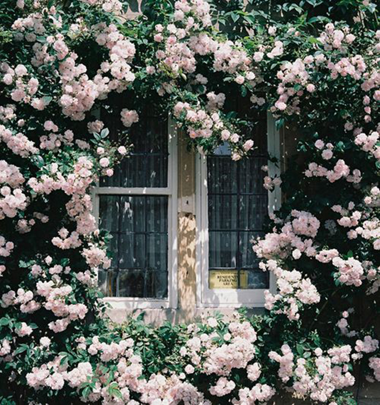 Pink flowers around country window