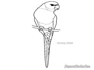 Mewarnai Gambar Burung Betet