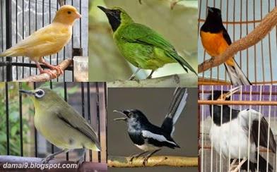 burung kicauan jenis jenis burung yang paling dicari saat