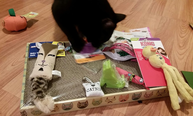 Purr Packs gift box items for cats