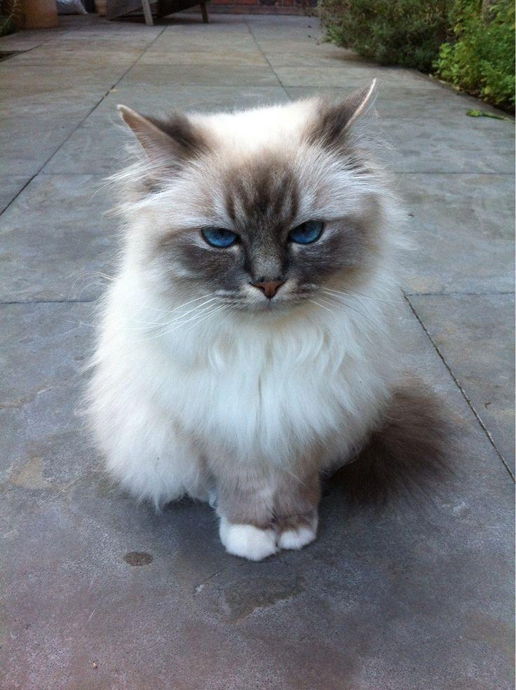 lovely pets : Top 10 Friendliest Cat Breeds