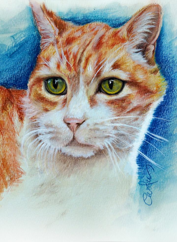 detalle-gato-dibujo-carolum-art