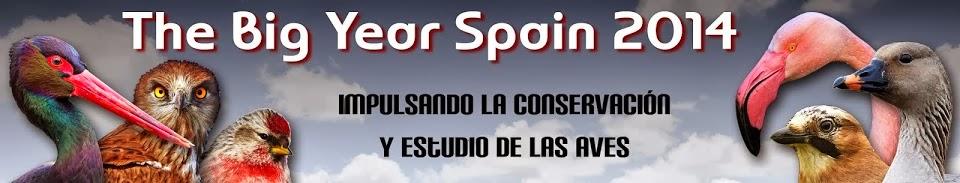 The Big Yera Spain 2014