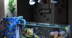 The best saltwater fish tank for beginners for Starting a fish tank for beginners