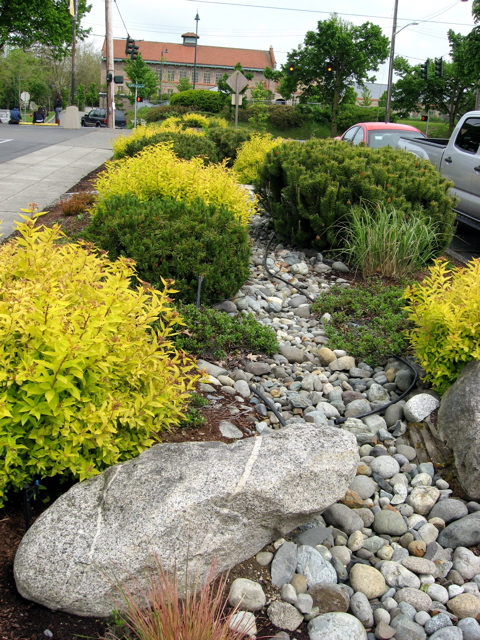 Seattle garden ideas commercial landscapes at pcc a dry for Landscaping rocks seattle