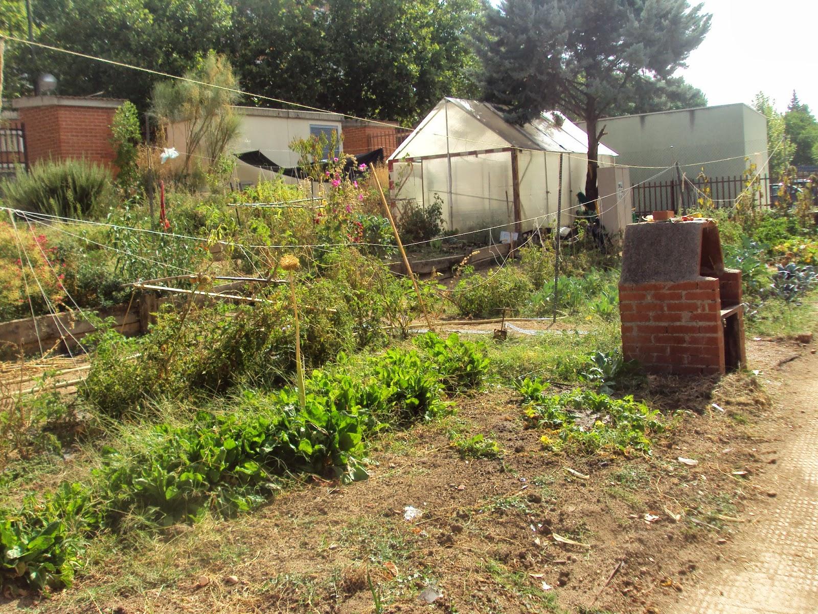 En torno al huerto actividades en el huerto escolar para - Huerto de plantas aromaticas ...