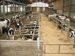 Απομάκρυνση κτηνοτροφικών μονάδων από κατοικημένες περιοχές