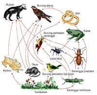 Macam-macam Interaksi antar Organisme - echotuts