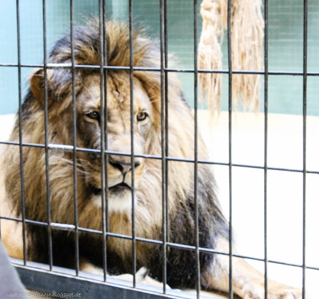 Ein Tag im Zoo Berlin