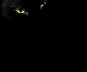Cerpen Horor: Kucing mengisahkan tentang kutukan yang terjadi gara-gara membunuh seekor kucing