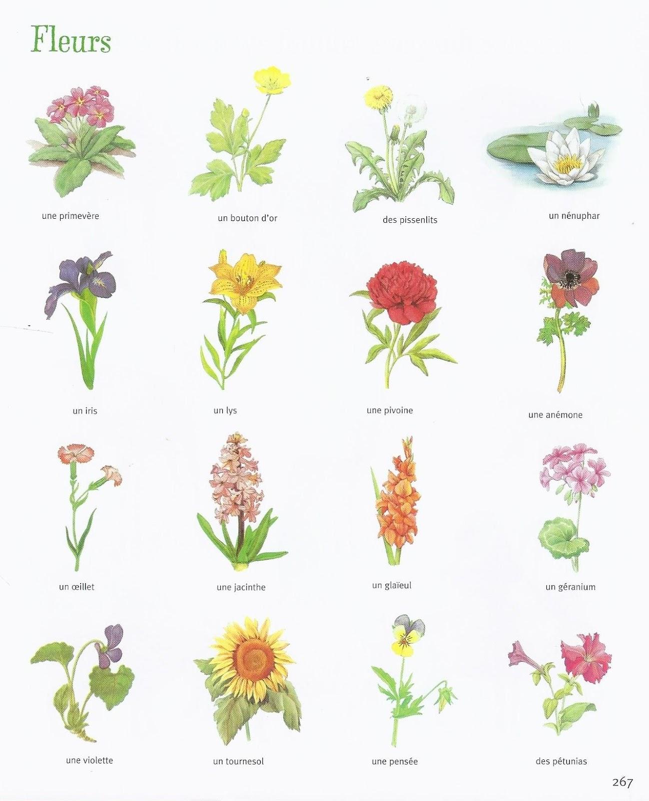 Mon enfant bilingue activit faire avec un enfant pour for Les noms des fleurs