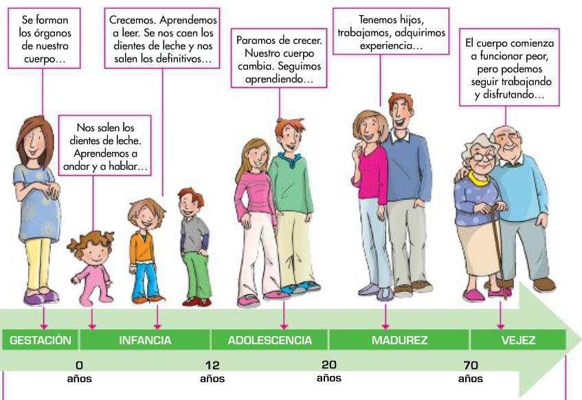 Dibujos Para Colorear Sobre Las Etapas De La Vida | apexwallpapers.com