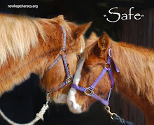 Archive of horse/rescue stories from 2007-2011