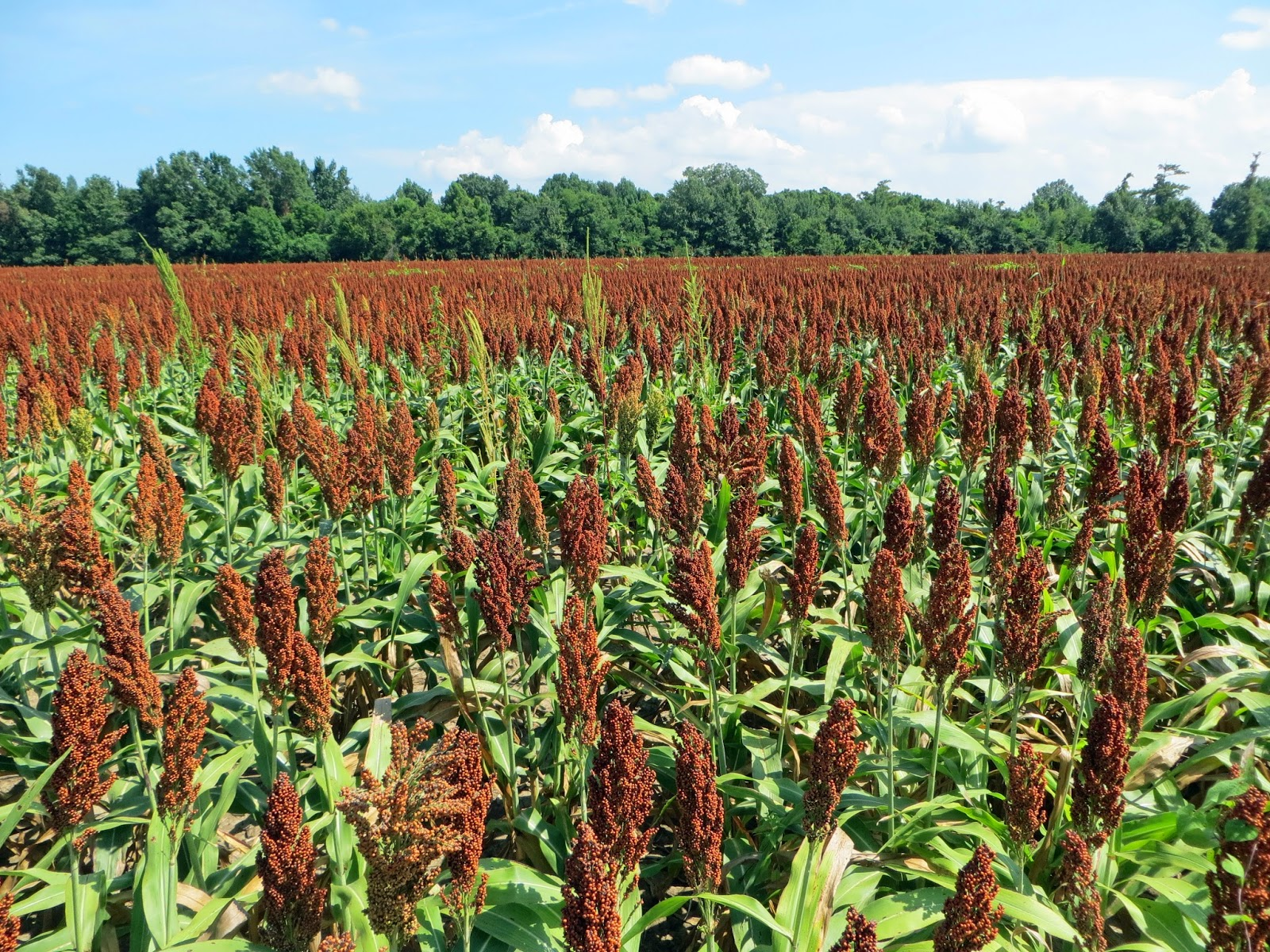 The Daily Rant: I See A Molasses Sorghum Cookie In My Future