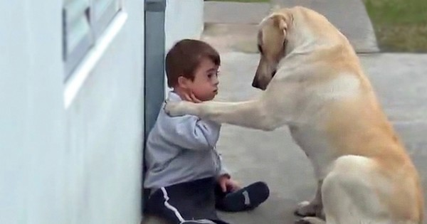 When Her Son Needed A Friend, This Dog's Response Brought Mom To Tears