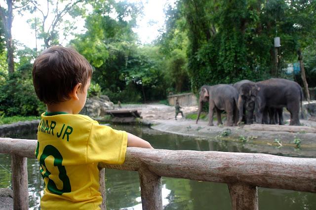Lucas apreciando os elefantes