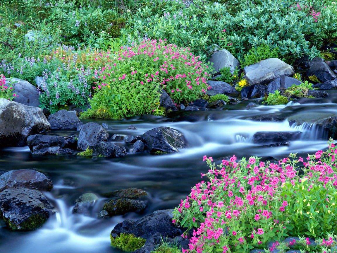 beautiful wallpapers and images: high definition nature wallpapers