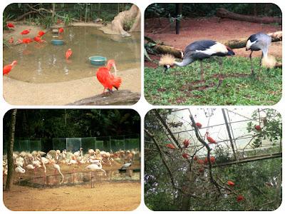 Flamingos e outras espécies do Parque das Aves, em Foz do Iguaçu.
