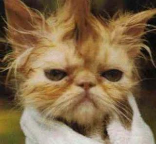Gambar Kucing Aneh