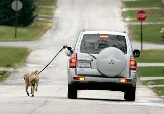 Passear o cão de carro