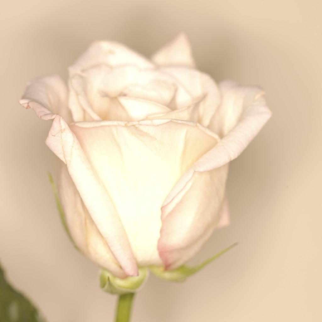 http://2.bp.blogspot.com/-FgWlCNcBTJ4/T5R8NIzhI6I/AAAAAAAAA2Y/FR_NlYO_FoY/s1600/MP900422099.JPG