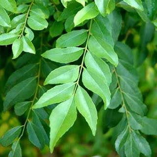 folha, planta
