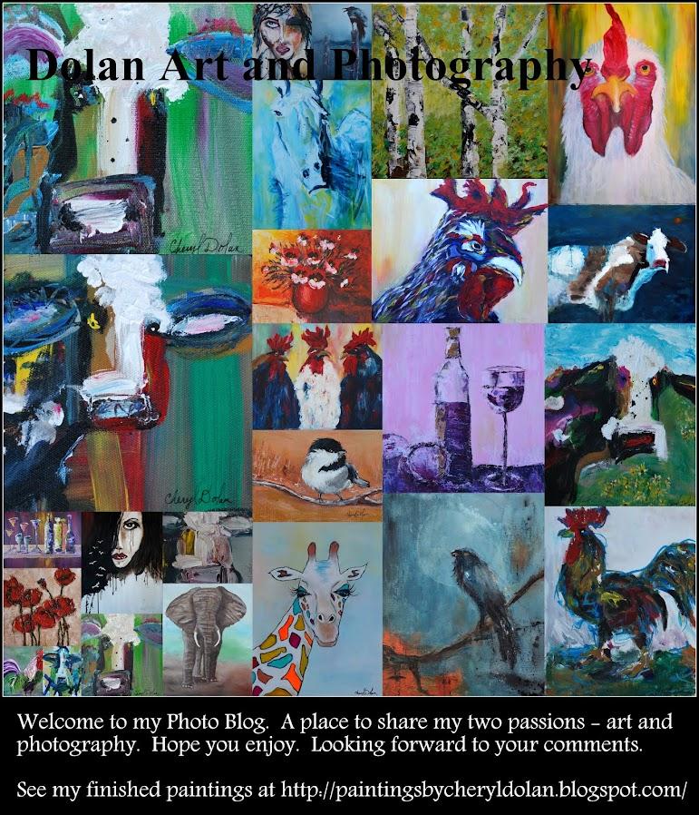 Dolan Art & Photography