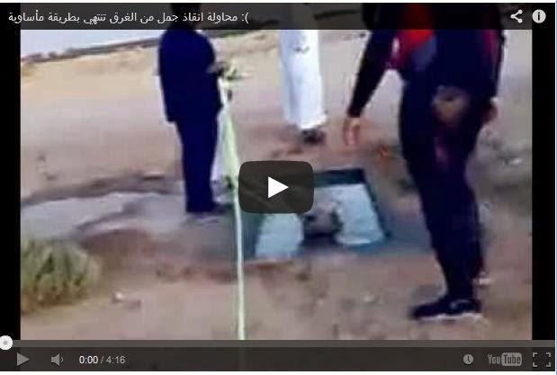 فيديو محاولة انقاذ جمل من الغرق تنتهي بطريقة مأساوية :(