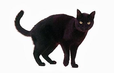 Interpretação de Sonhar com Gatos