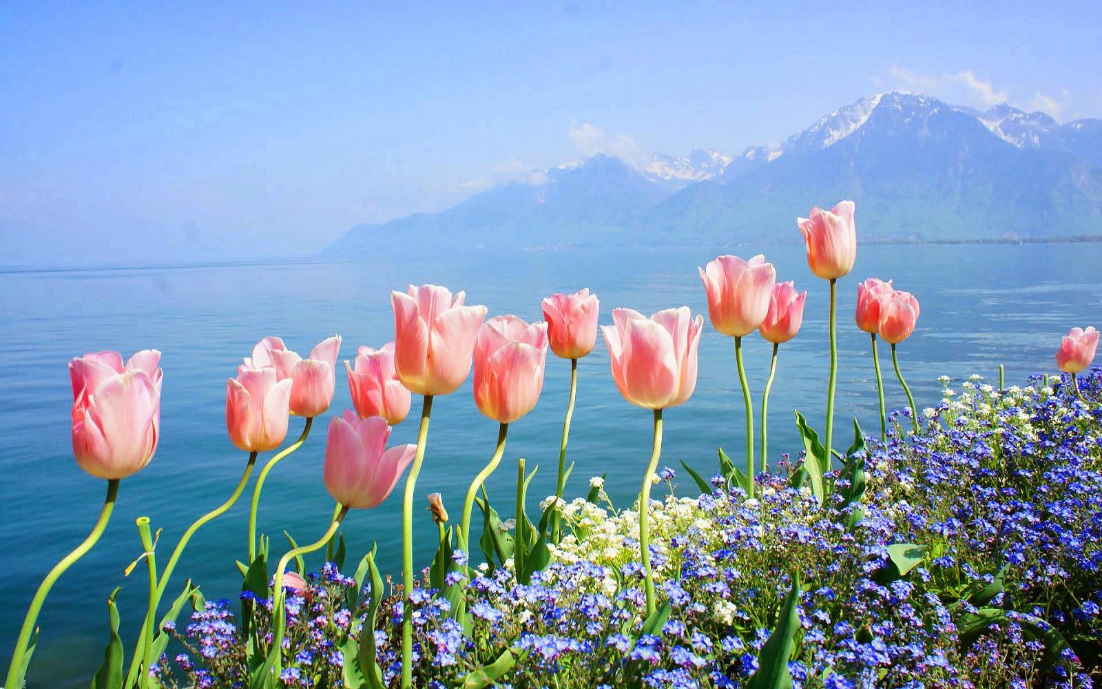 Roze tulpen en blauwe bloemen langs de waterkant in de lente