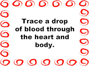 Trace a Drop of Blood Through the BodyCirculation Made Simple