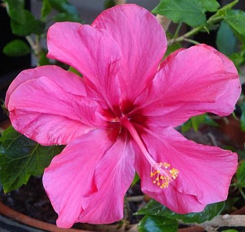 https://pipparathborne.wordpress.com/2015/08/06/a-vague-impression-of-pink/