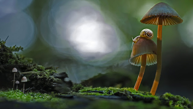 Two snails atop a mushroom (© Marianna Armata/Getty Images) 669