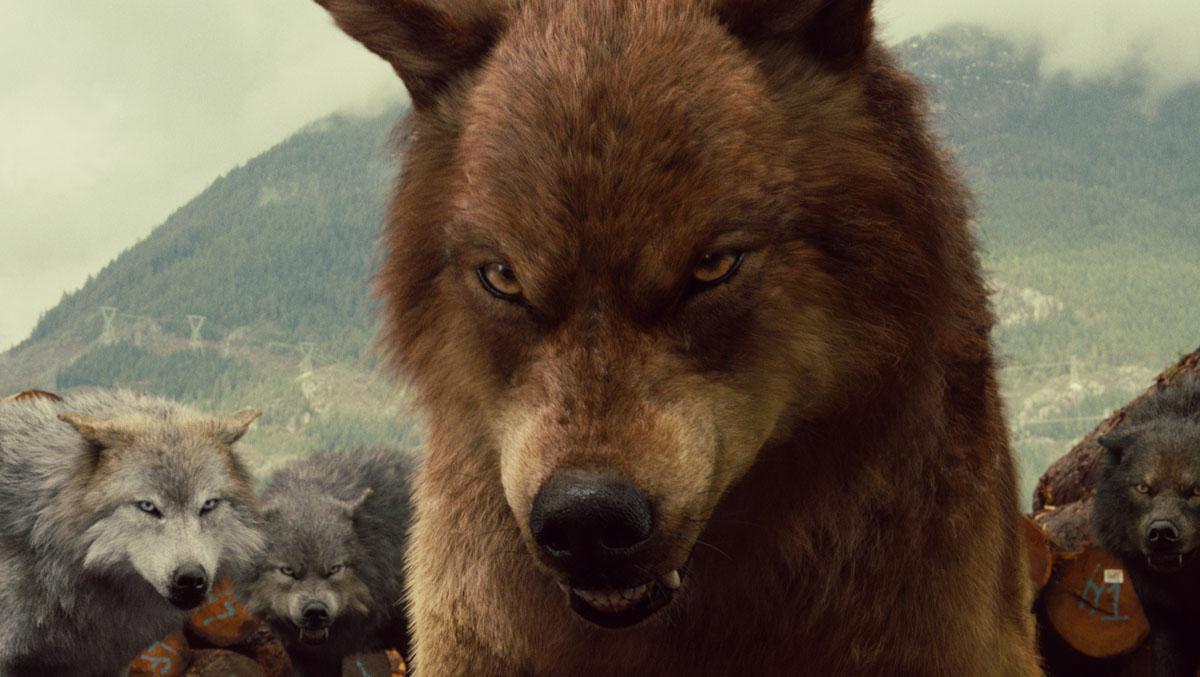 Story Of The Forbidden Love: Wherewolf Werewolf Twilight Jacob