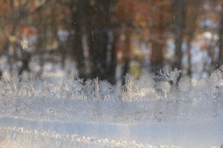 photo of sunshine on frosted window