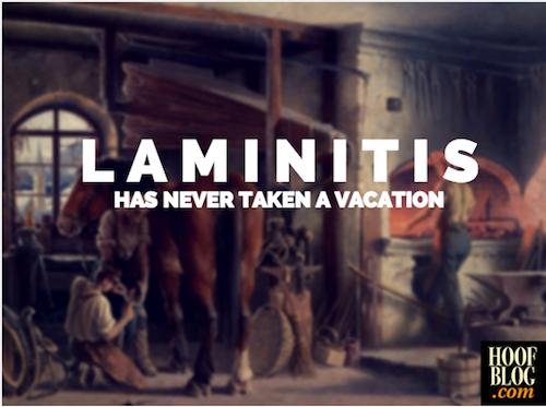 laminitis has never taken a vacation