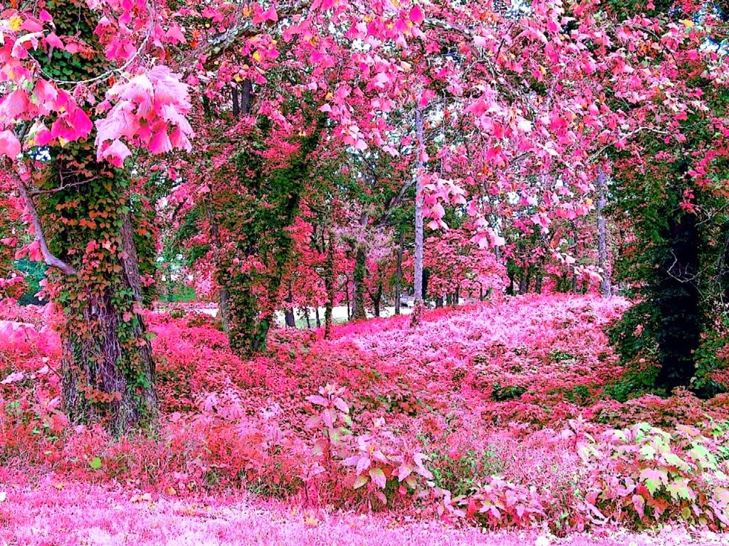 Pink flower garden wallpapers for Flower garden landscape