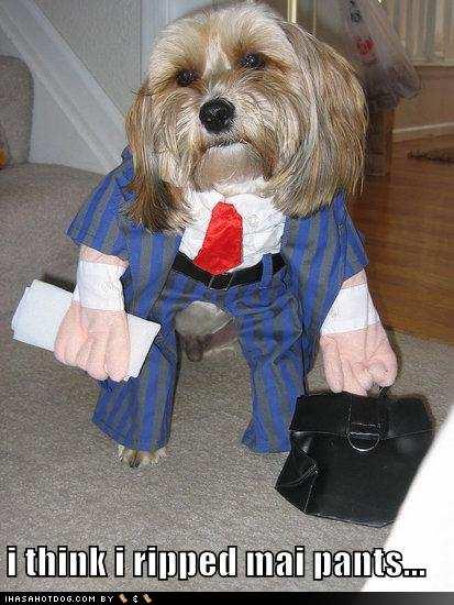 Funny+dog+style