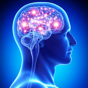 BLUE BRAIN: The Brain Made By Human - TECHurosity   new technology ...
