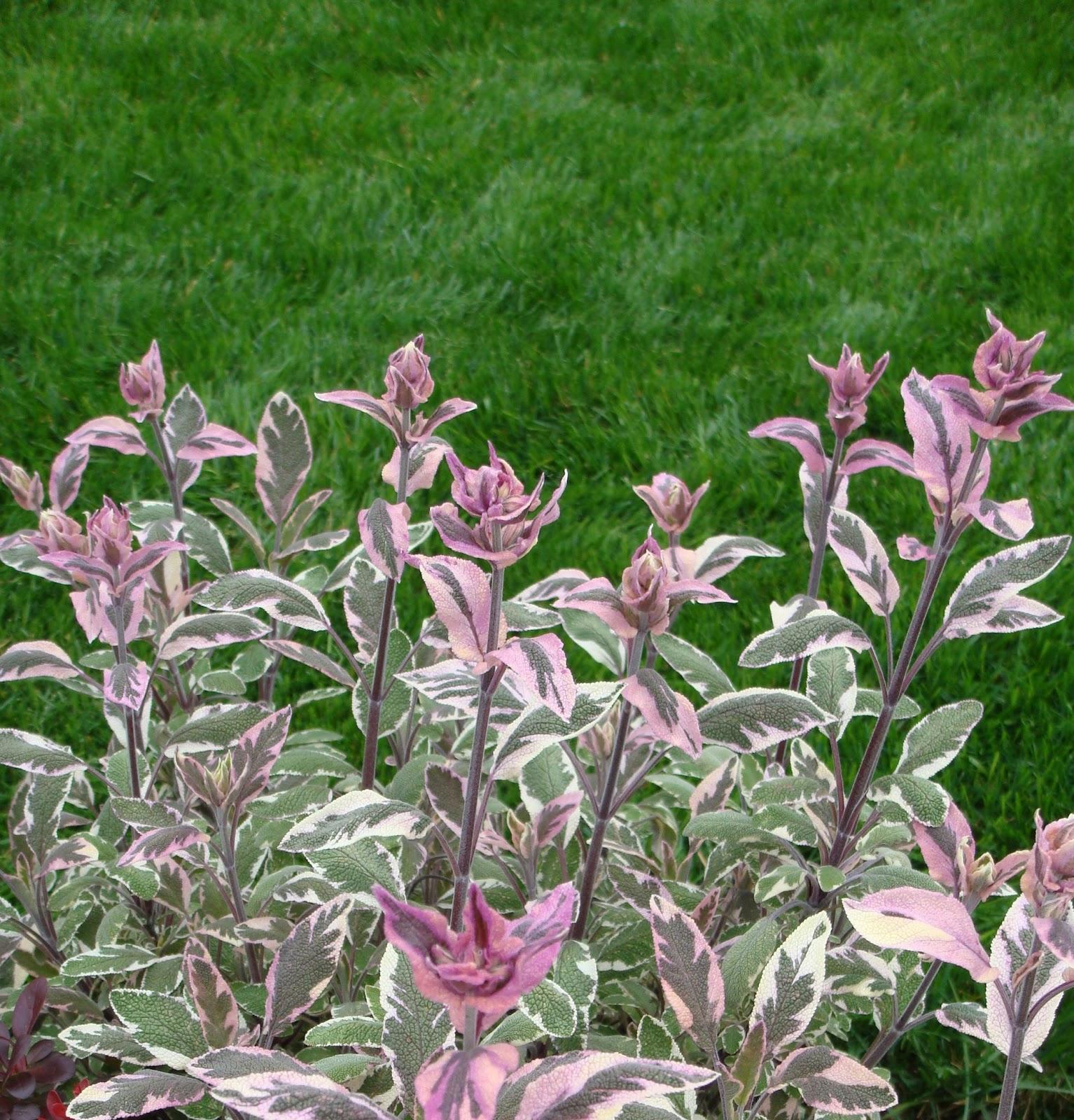 Arte y jardiner a plantas arom ticas como dise ar un jardin for Hierba jardin
