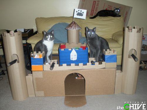 rumah kucing comel